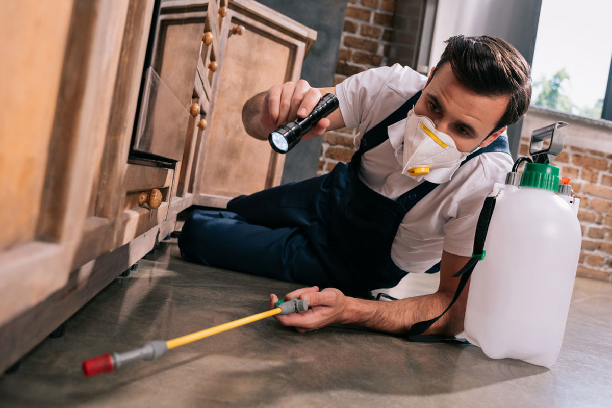TOP TEN PEST CONTROL COMPANIES IN SYRACUSE